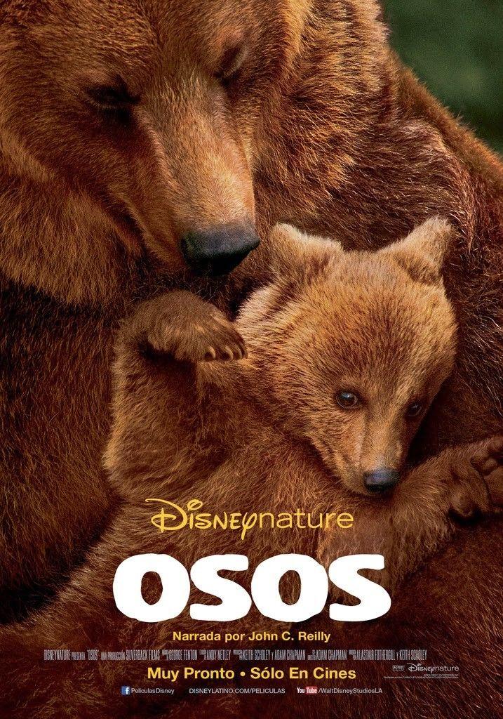 постер земля медведей